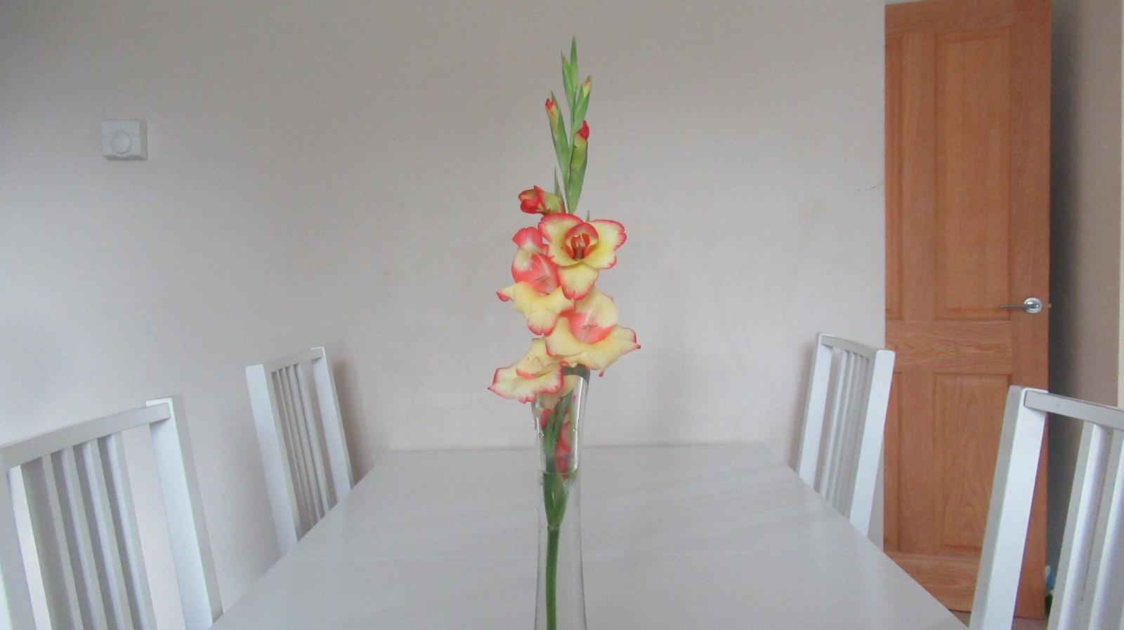 gladioli photos